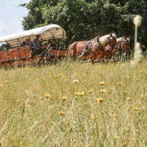 carrozza parco 2